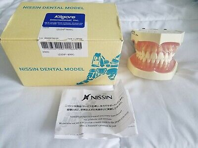 Nissin Kilgore Dental Study Model W Removable Teeth - Perfect Condition