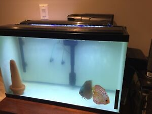 Discus proven breeding couple with breeding tank