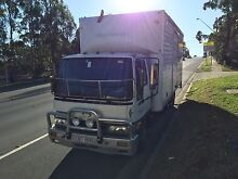 Hino truck for sale because closing down business Glenfield Campbelltown Area Preview