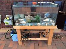FISH TANK WITH THE LOT... Oakleigh South Monash Area Preview
