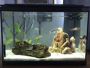 10 and 20 gallon aquarium with fish