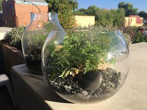 Terrarium Vases Bowls Gumtree Australia Perth City Area