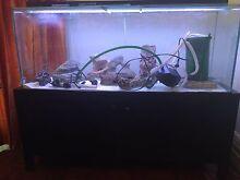 4ft fish tank aquarium North Turramurra Ku-ring-gai Area Preview