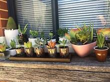 $4-$30 Fancy Succulent Arrangements made for Xmas Pressies! Bayswater Bayswater Area Preview