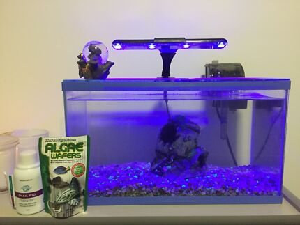 Small Fish Tank and Equpiment