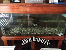 Turtle tank and 2 turtles Evanston Gawler Area Preview