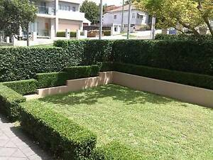 Lawn mowing and Gardening services Macquarie Park Ryde Area Preview