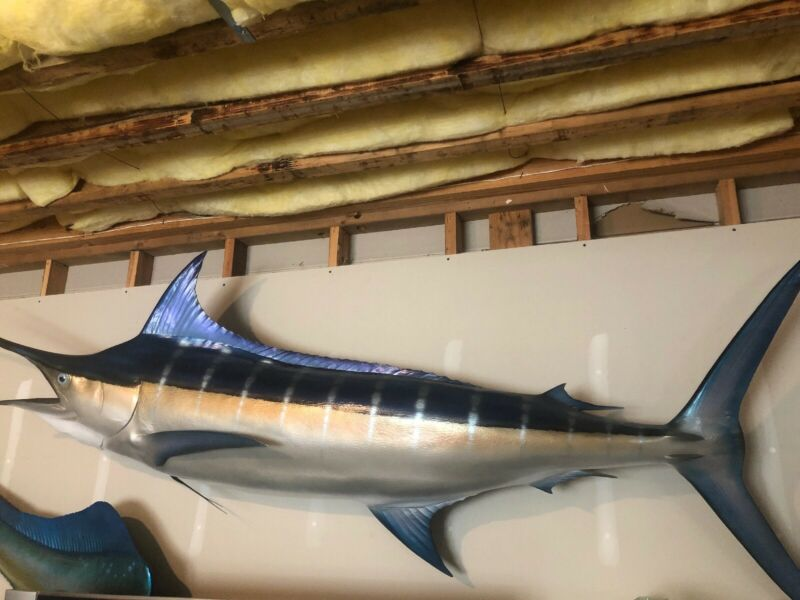 🔥🔥🔥10 Foot Plus Beautiful Blue Marlin Fish Mount