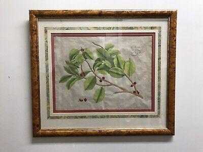 17th Century Framed Print - PAIR (2) 17TH Century Botanical Prints    Beautiful Burl wood frames