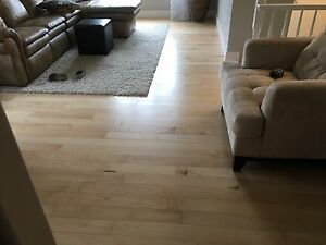 300 sq ft solid natural maple hardwood