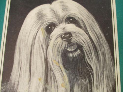 Lhasa Apso Pet Dog Big Lot Vintage Tibet Guard Dog 1970s