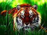 Tiger Trove