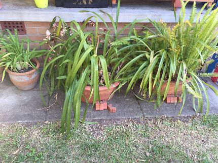 Potted plants Woodberry Maitland Area Preview