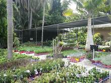 PLANT NURSERY  PERTH CHEAP GROWER DIRECT Darch Wanneroo Area Preview