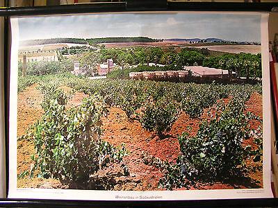 Schulwandbild Wandbild Bild Wein Weinanbau in Südaustralien Australien 72x51cm