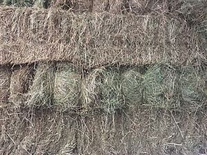 MEADOW HAY FOR SALE Orangeville Wollondilly Area Preview