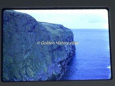 KITTIWAKES SKOMER ISLAND WALES  35mm SLIDE PHOTO PICTURE VINTAGE PHOTOGRAPH