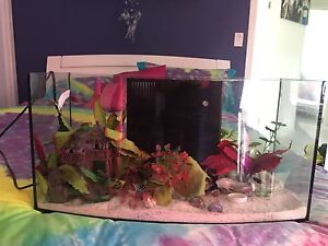 Hermit crab set up Wivenhoe Pocket Somerset Area Preview