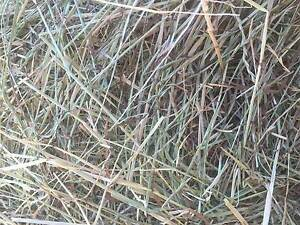 horse hay for sale Rochester Campaspe Area Preview