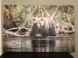 """Bear picture on canvas 36"""" x 24"""""""