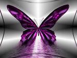 butterflies&angels