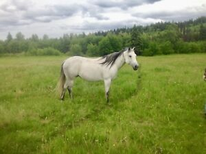 Two companion horses for sale