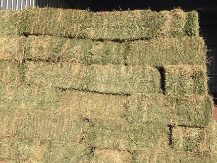 Lucerne hay top northern quality