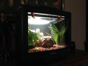 Custom Fish Tank Television Kardinya Melville Area Preview