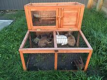 3 gorgeous bunnies also includes their double storey wood hutch Pakenham Cardinia Area Preview