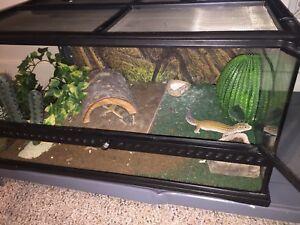 Leopard Geckos + Terrarium