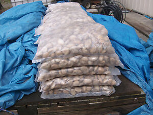 River Pebbles 10 x 10kg bag lots
