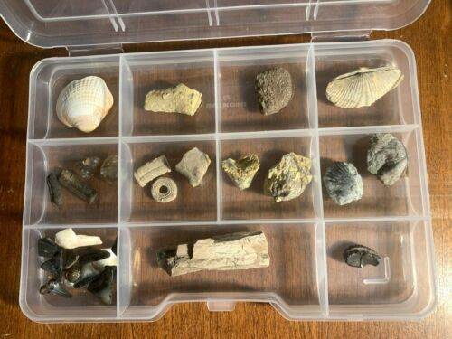 Fossil collection shark teeth porcupine fish coral whale bone ray wood - Kit01