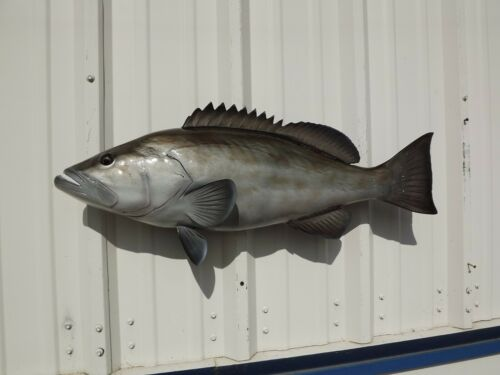 """32"""" Gag Grouper Two Sided Fish Mount Replica - 10 Business Day Production Time"""