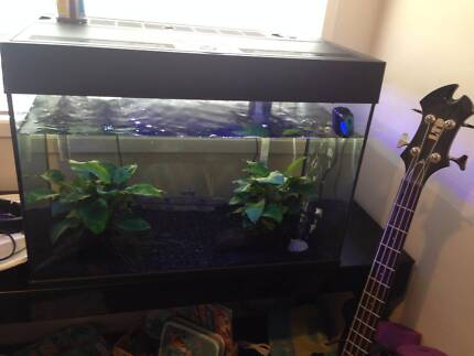 Fish tank with fish Wollert Whittlesea Area Preview