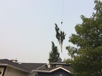 Tree Service - 15% off all jobs booked before October 1st