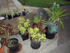 plant sale Port Noarlunga Morphett Vale Area Preview