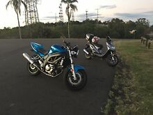 SV Suzuki 650 Manly Brisbane South East Preview