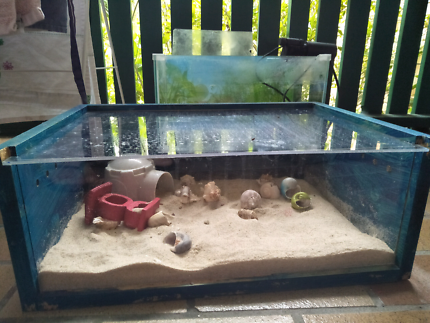 Homemade hermit crab home.