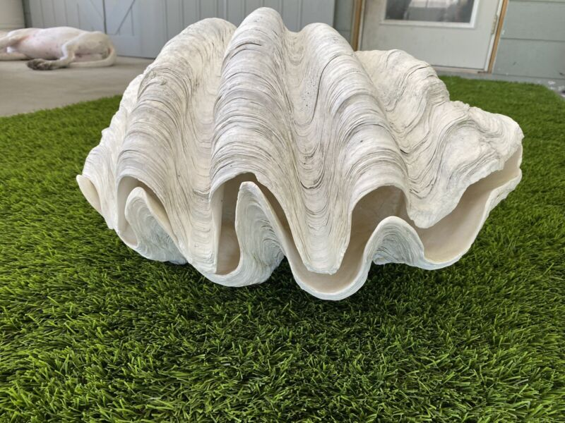 Matched Pair Of Tridacna Gigas Clam Shell