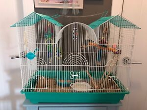 Two budgies and cage + supplies