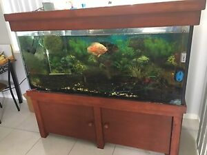Large fish/reptile tank Griffin Pine Rivers Area Preview