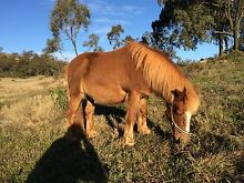 Pony and gear Glenvale Toowoomba City Preview