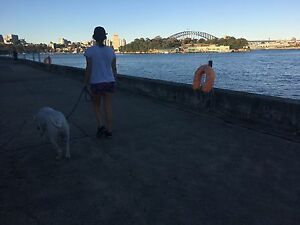 Sydney Inner West Dog Walking Lilyfield Leichhardt Area Preview