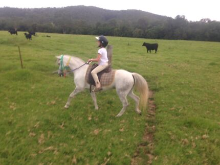 WELSH PONY MARE Stroud Great Lakes Area Preview