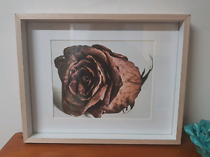Rose print 8 x 10 inch print framed timber Toukley Wyong Area Preview