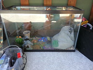25 gallon fish tank with all of the extras