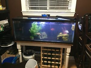 45 gallon Long established tank