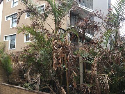 Mature palms