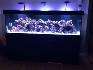 Parting Out 125 gallon reef