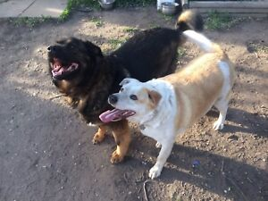 Two Dogs for rehoming